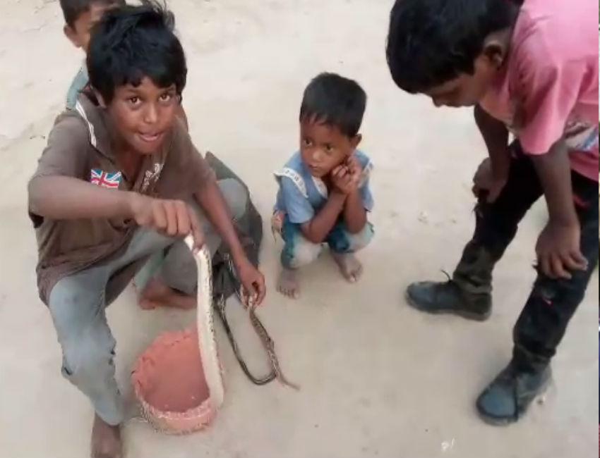 Video Story: हर जहरीला सांप बन जाता है इन बच्चों का दोस्त, खेलते हैं खिलौना समझकर