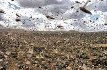 यह कीड़ा बढ़ा रहा है किसानों की मुश्किलें