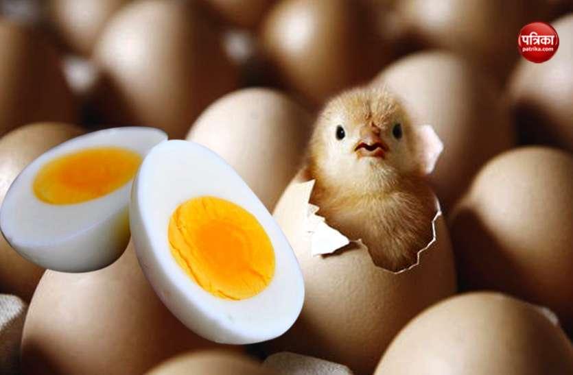 सरकार के गले में अंडे का फंदा, बच्चों को खाने दिया तो प्रदेशभर में मचा बवाल