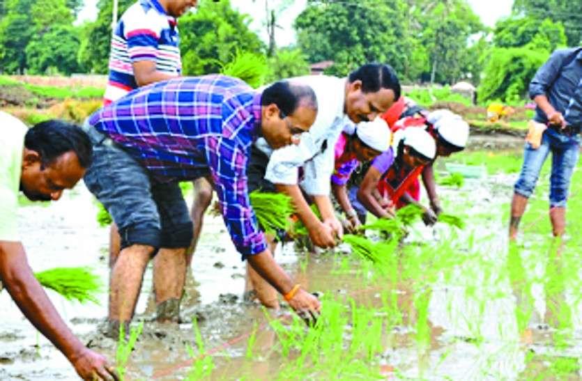 कांकेर: हैरान रह गए लोग जब किसानों के साथ धान की रोपाई करने पहुंचे IAS अफसर