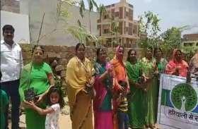 जोधपुर में हरयाळो राजस्थान के तहत रोपे पौधे