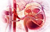 Kidney Cancer: पेटदर्द व यूरिन में ब्लड हो सकते हैं किडनी कैंसर के लक्षण