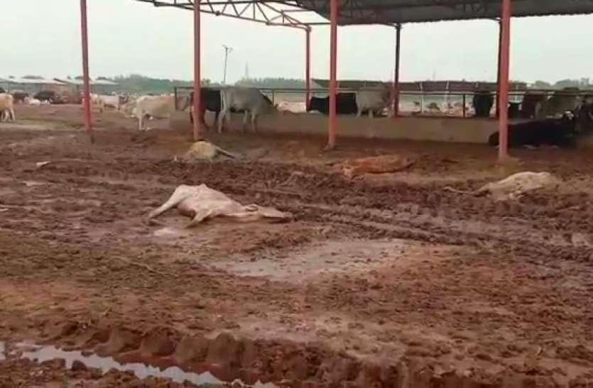Ayodhya : नगर निगम की गौशाला में गायों की मौत पर सपा ने योगी सरकार को घेरा