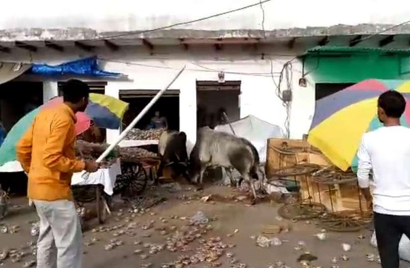Bull Live Fight in Firozabad: दो सांडों में हुआ खूनी संघर्ष, सब कुछ कर दिया तहस नहस, नाले में गिरकर एक की मौत, देखिए लाइव वीडियो