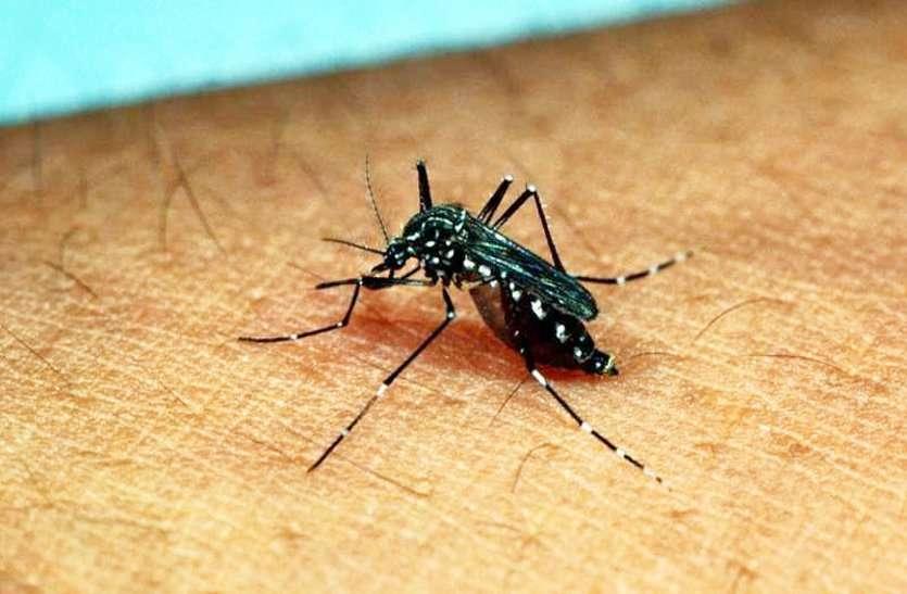ग्वालियर में बड़ रहा है मच्छरों का अटैक, प्रशासन की फोगिंग नहीं कर रही काम