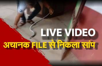 LIVE VIDEO : अचानक FILE से निकला सांप