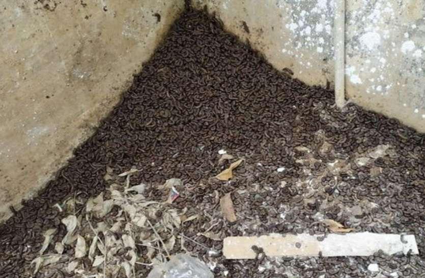 वडोदरा जिले के भादरवा गांव में कीड़ों से परेशान लोग