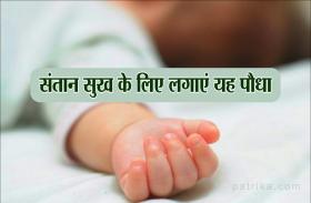 Vastu tips: जामुन का पौधा लगाने से जन्म लेती है कन्या, इन पौधा का भी है अपना अलग महत्व