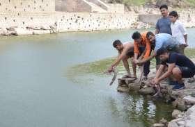 युवाओं ने बढ़ाया कदम, पानी की कमी से मर रही मछलियों को नागादड़ी तालाब में डाल बचाया