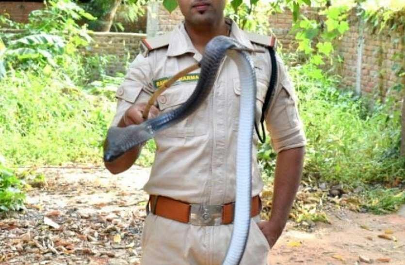 अमरकंटक की आकर्षक पहाडिय़ो में है कोबरा का राज