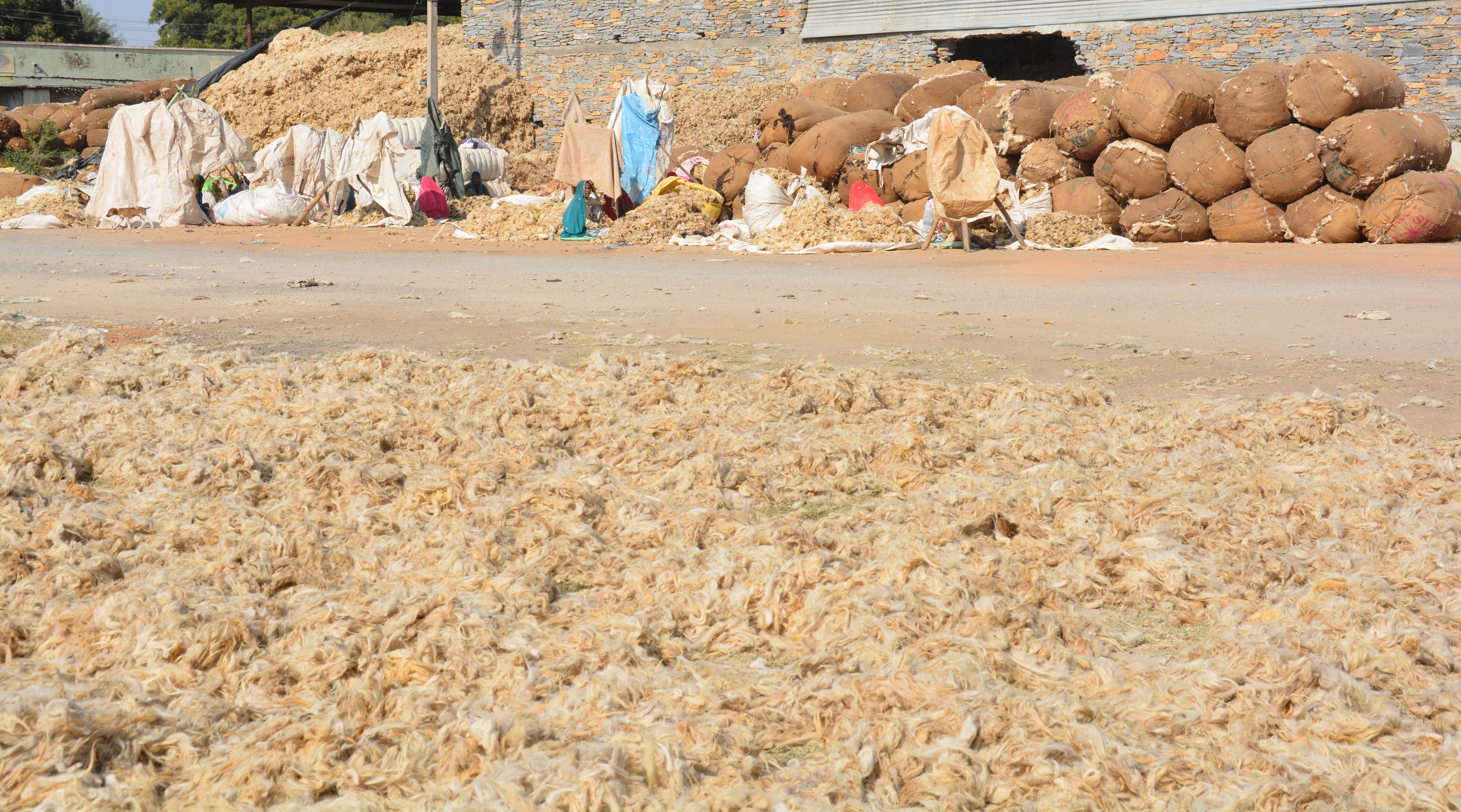 wool market : चाइना वूल ने ठंडा किया देसी उन का कारोबार