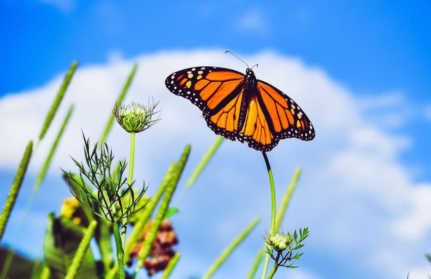 जबलपुर : खूबसूरत तितलियों की जन्नत