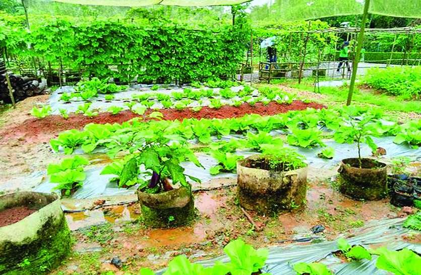 अभिनव प्रयास : स्कूलों के पार्क में उगाई जाएगी सब्जी, उसी से बनेगा मध्यान्ह भोजन!