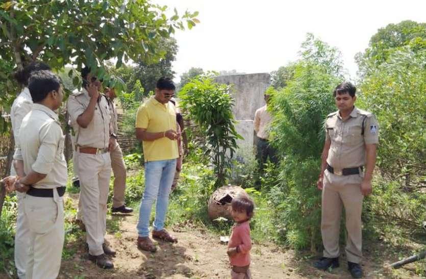 बाड़ी में उगा रही थी गांजा के पौधे, जानिए पुलिस ने महिला आरोपी को कैसे पकड़ा