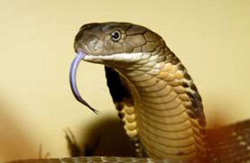 World snake day: मध्यप्रदेश का यह जिला सांपो के लिए बना पिकनिक स्पॉट