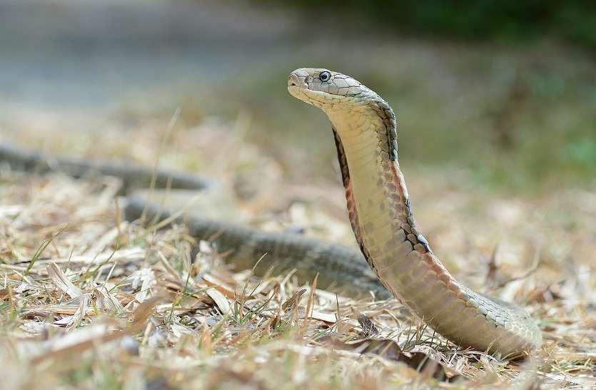 Snake bite case