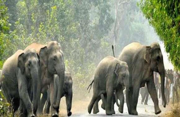 आबादी क्षेत्र के नजदीक पहुंचा 20 जंगली हाथियों का दल, ग्रामीणों में दहशत