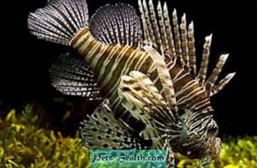 महज दस दिन के भीतर मछलियां बन जाती हैं मादा से नर, जानें इसके पीछे का रहस्य