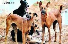 बांसवाड़ा में उमस के 15 दिनों में कुत्ते बने आक्रमक, 100 से अधिक लोगों को बनाया शिकार