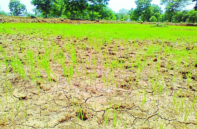 आषाढ़ में बेरुखी, अब सावन में अच्छी बारिश की उम्मीद खेतों में हरियाली की जगह पीलापन, बूंदभर पानी नहीं