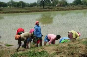 सप्ताहभर से वर्षा नहीं होने से क्षेत्र के किसान परेशान, बुआई भी पिछड़ी