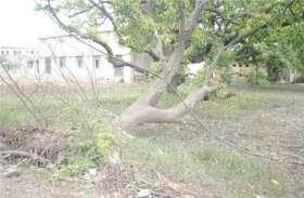 यहां पानी ही बन गया पेड़ों का दुश्मन