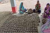 केन्या की इस पद्धति से छत्तीसगढ़ की बंजर जमीन पर भी आएगी हरियाली, जानिए कैसे होगा यह मुमकिन