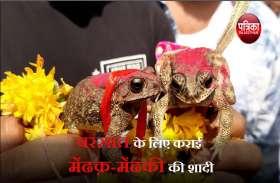 राजस्थान में अनूठी शादी, साक्षी बने सैंकड़ों लोगों के बीच परिणय सूत्र में बंधे मेंढक-मेंढकी, जाने वजह