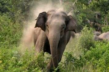 करंट से मारे गए तीन हाथी, ग्रामीण करेंगे श्राद्ध