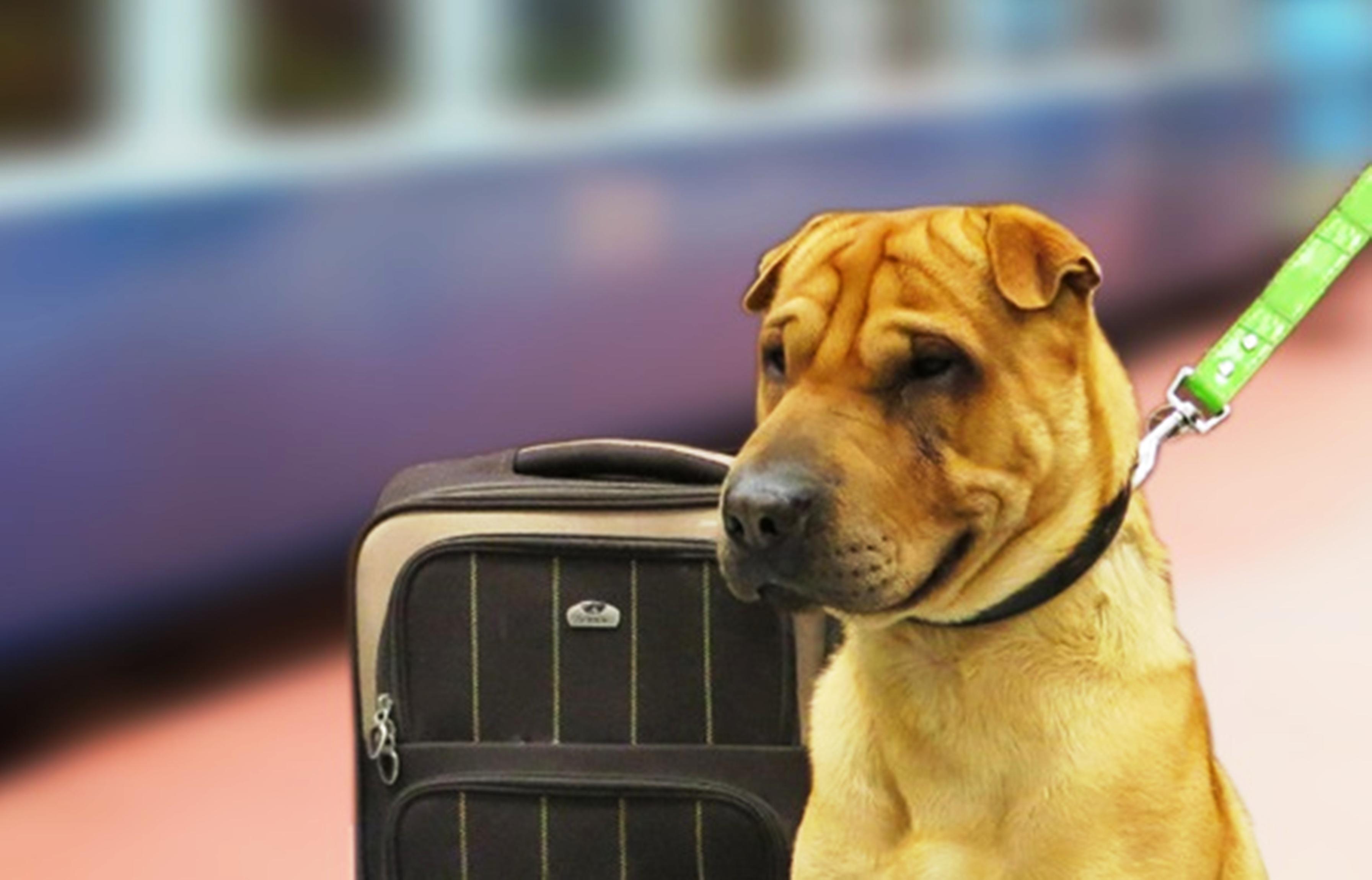 ट्रेन के एसी कोच में कुत्ते कर रहे बिना टिकट के यात्रा
