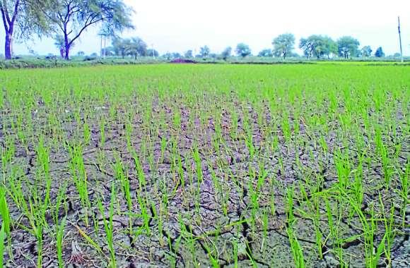बारिश के इंतजार में खेतों में पड़ने लगी दरारें, सावन में बौछारों की उम्मीद कर रहे किसान