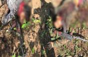 लोहरदगा में हुई भीषण मुठभेड़, JJM के 3 नक्सली ढेर, 2 AK-47 बरामद