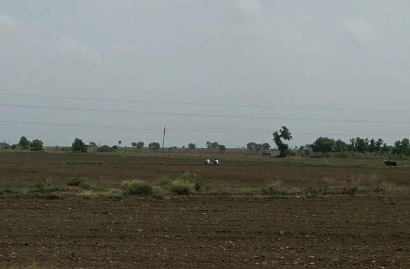 बढ़ते तापमान से मिट्टी की नमी होने लगी कम, बीजों को नुकसान
