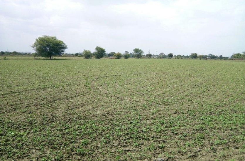 इस वर्ष किसानों ने सोयाबीन पर किया भरोसा, बढ़ गया रकवा