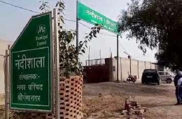 श्रीगंगानगर इलाके में पशुओं से हो चुकी है इस साल सात जनों की मौत