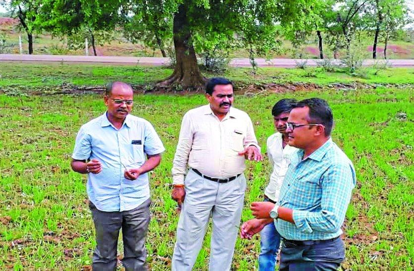 फसल का हाल जानने खेतों में उतरे कृषि वैज्ञानिक, 7 दिन में अच्छी बारिश नहीं हुई तो फसल बचाना होगा मुश्किल