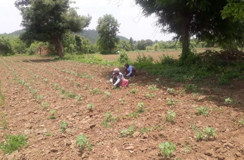 किसान की मेहनत पर मौसम की मार, चिंता बढ़ी