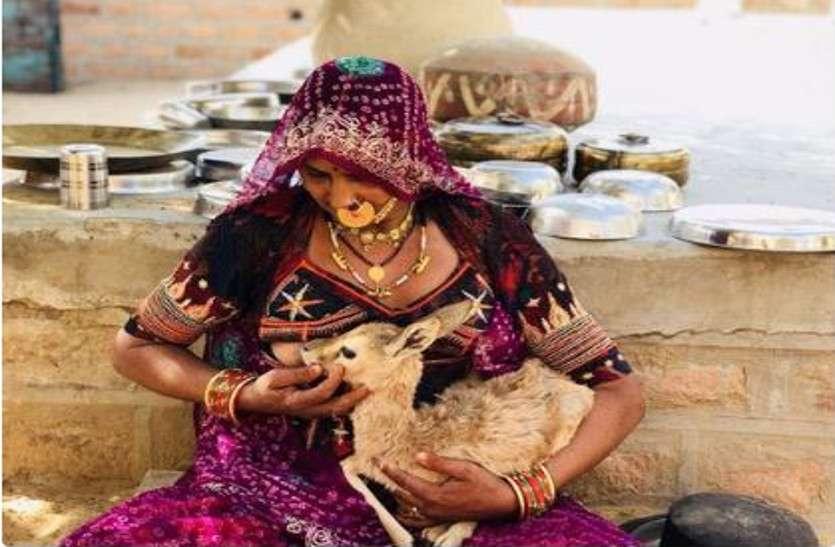 बिश्नोई समाज की उस महिला की फोटो हुई वायरल, जिसने अपने बच्चे की तरह कराया था मासूम हिरण को स्तनपान