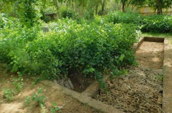 दगा दे गए बादल, वन विभाग ने रोका पौधरोपण
