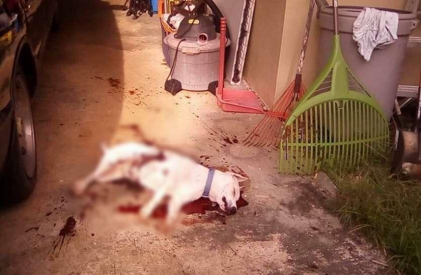 सर पर था कर्ज का भार, दोनों पालतुओं की हत्या कर खुद को मारी गोली