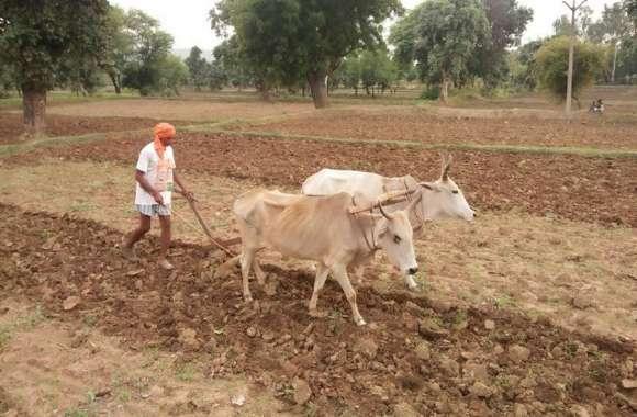 बारिश के अभाव में पिछड़ रही जिले में बोनी
