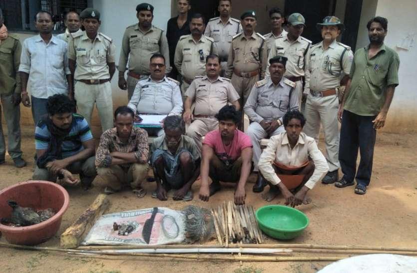 11 केवी क्षमता का करंट बिछाकर चीतल का किया शिकार, पांच गिरफ्तार