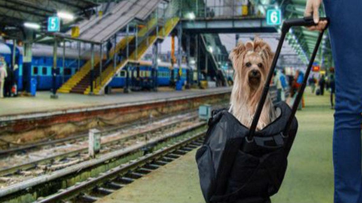 पालतू डॉग के साथ रेल यात्रा करने के लिए बुक कराना होगा एसी कोच का कूपा