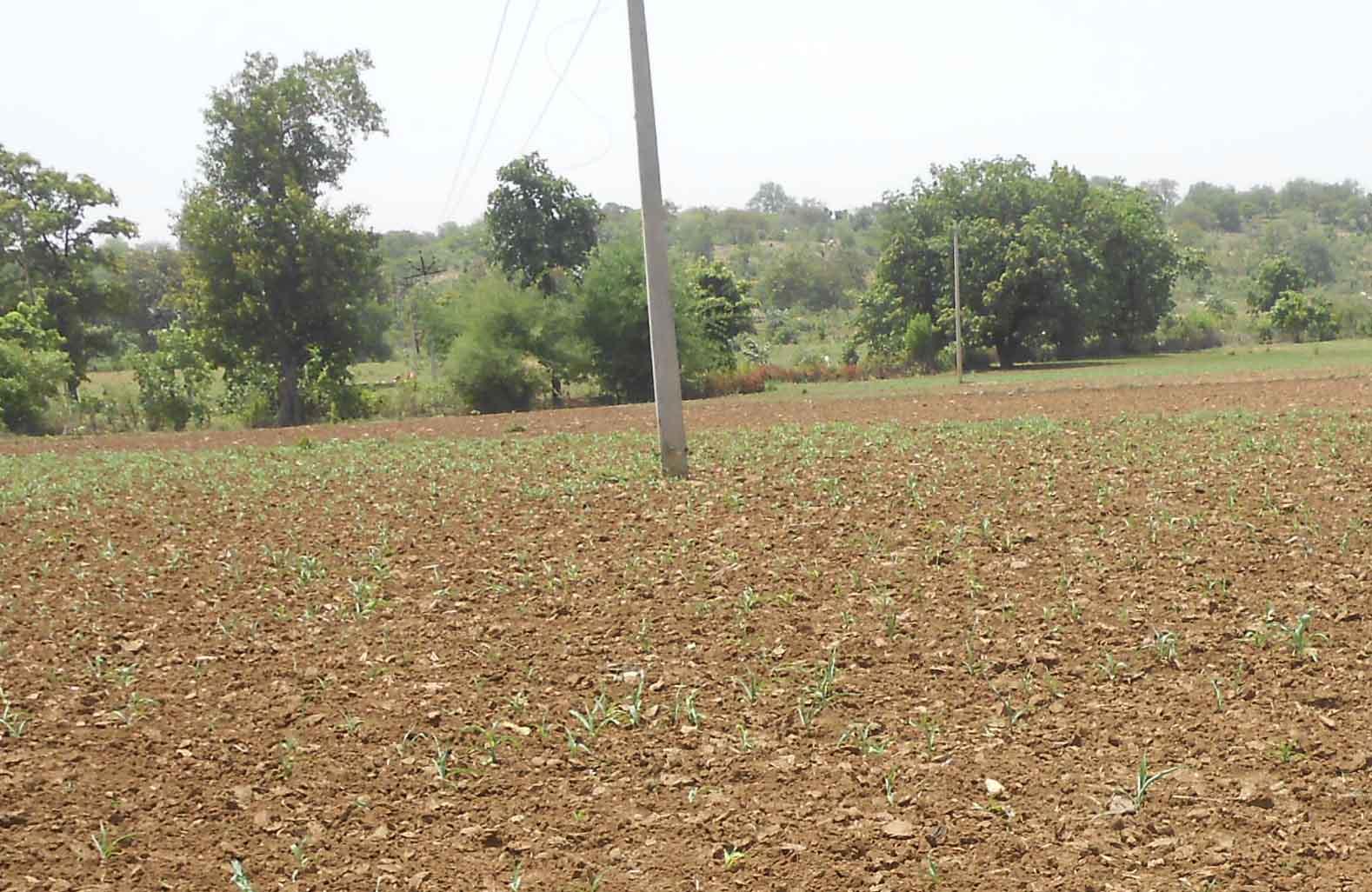 संकट में अन्नदाता- खामोश मेघों से चिंता में किसान, वनांचल में बेहद खराब हालात