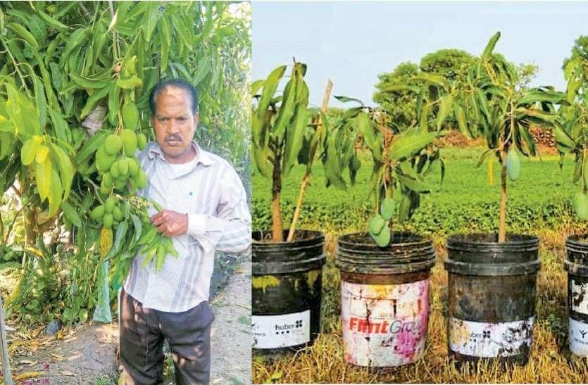 कोटा के श्रीकिशन का कमाल, खोजी आम की ऐसी पौध की वैज्ञानिक भी रह गए दंग