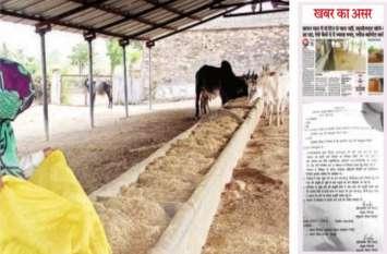 अधिकारी ने जयपुर भेजी रिपोर्ट में बताया- रास्ते में ट्रक खराब होने से चारा आने में देरी, सरकारी अर्बुदा गोशाला में आया 26 टन सूखा चारा