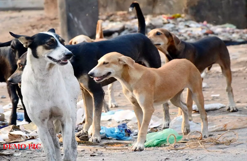 hotels serving dog meat as mutton