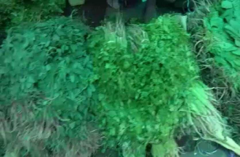 OMG: कभी मिलती थी फ्री, अब जयपुर में फ्लाइट से पहुंच रही 'यह' सब्जी