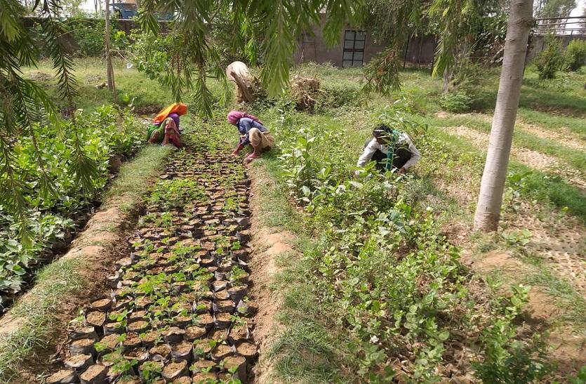 Bharatpur news ...पौधे वितरण पर मानसून की बेरुखी का असर