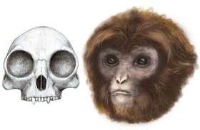 ऐसे थे दुनिया के सबसे छोटे बंदर, वैज्ञानिकों को मिले सबूत